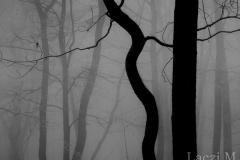 Winter fog in the nest-box plot
