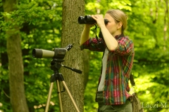 Searching for flycatchers