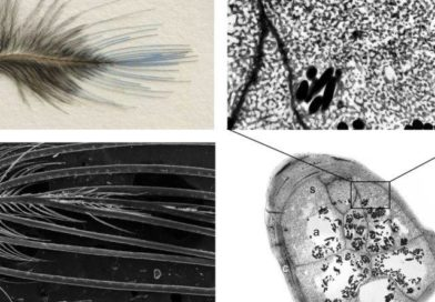 Plumage colour signals: dynamic and static mechanisms